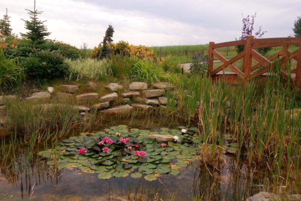 Lilly ponds at the Hospice